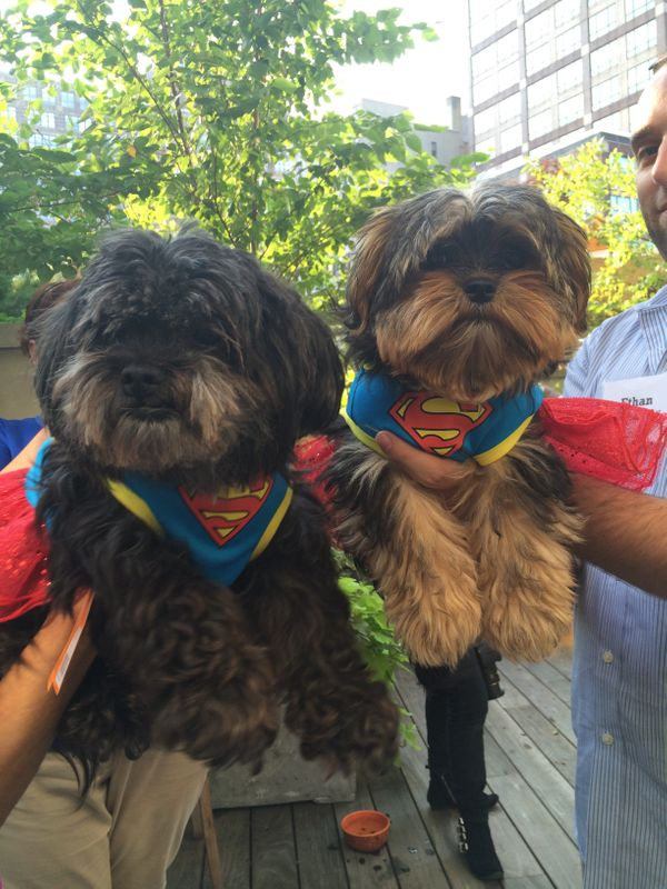 They're off to fight crime, or to smell some dog butts.