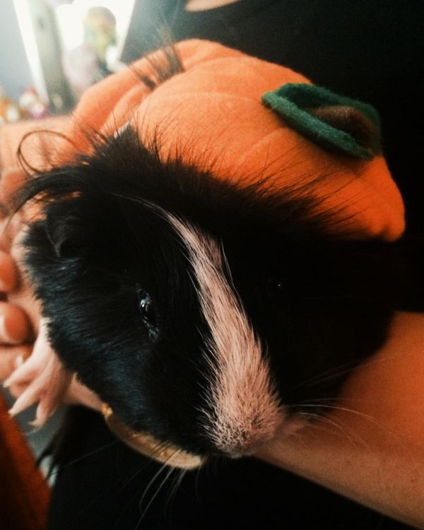 "Seriously, though, don't let your small pets miss out on the Halloween fun, <a href=""http://www.petsmart.com/promotions-us/sm"