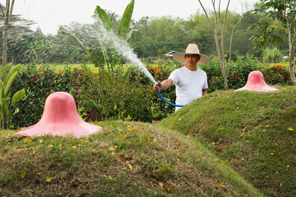 A groundskeeper waters two landscaped breasts at the Erotic Garden and Teahouse on February 6, 2015 in Mae Rim, Thailand.