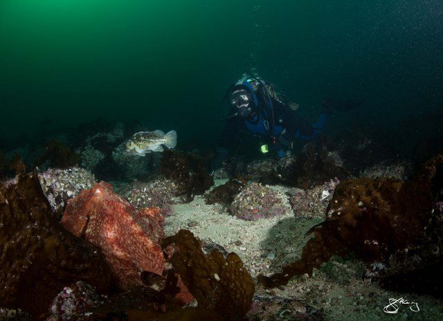 """Canadian biologist Jackie Hildering is using <a href=""""http://www.huffingtonpost.ca/2015/02/24/giant-octopus-divers-face-photo"""