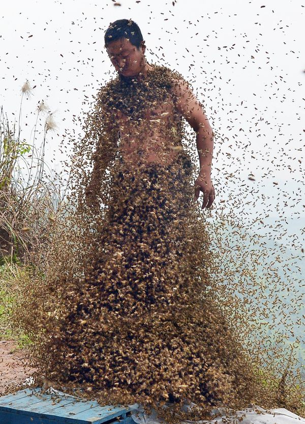 This picture taken on April 9, 2014 shows She Ping, a 34 year-old local beekeeper, covered with a swarm of bees on a small hi