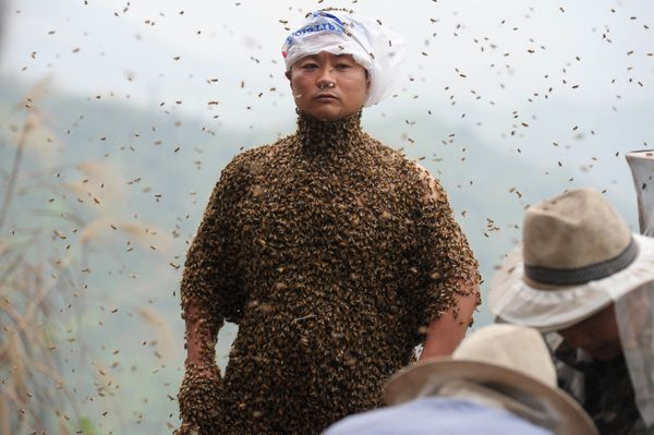 This picture taken on April 9, 2014 shows She Ping, a 34 year-old  local beekeeper, covered with a swarm of bees on a small h