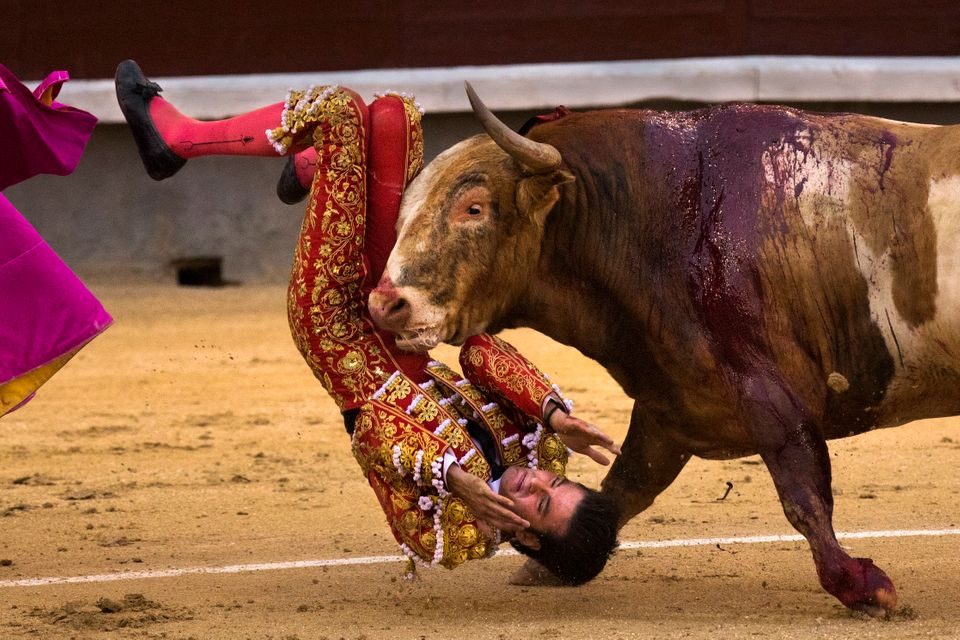 FILE - A Sunday, May 3, 2015 photo from files showing bullfighter Leonardo San Sebastian being gored by a bull during a bullf