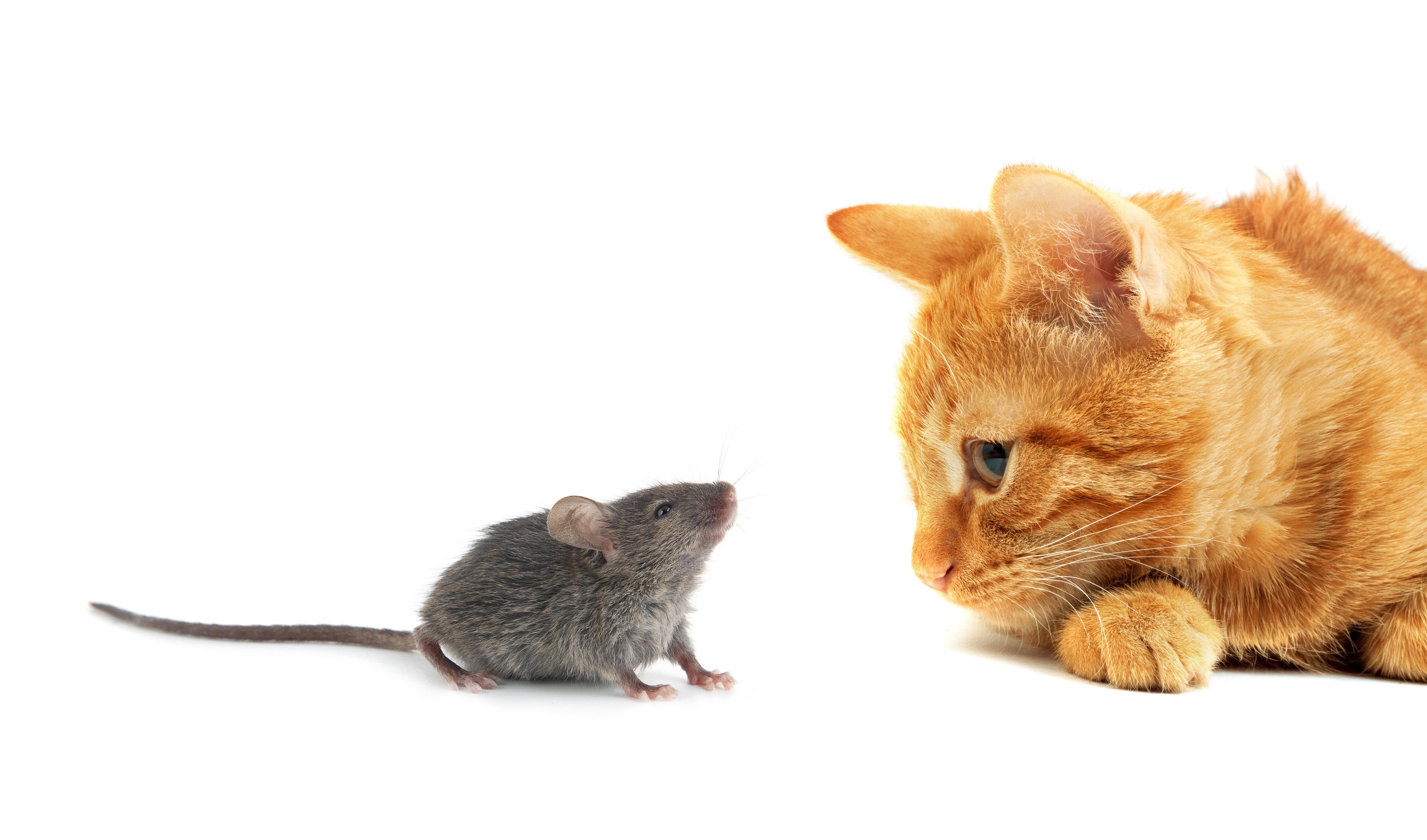 고양이의 쥐 잡기 능력을 평가한 연구가