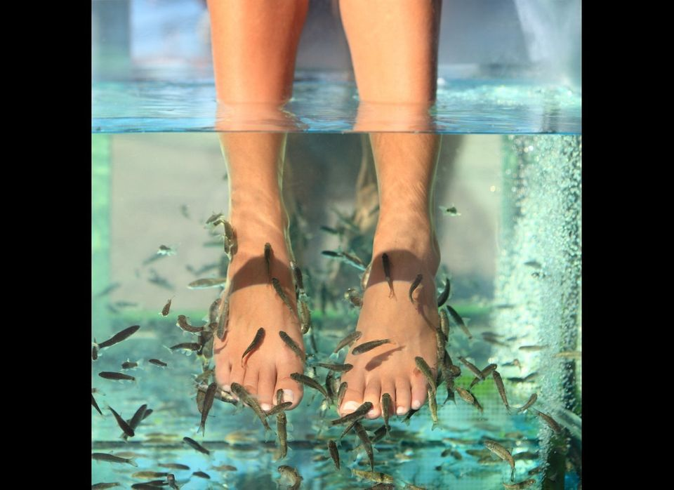 "<a href=""http://www.thestar.com/living/article/830236--little-nibblers-fish-pedicures-are-popular-but-controversial"" target="""