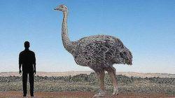 '지구 역사상 가장 커다란 새'의 무게는 1톤에