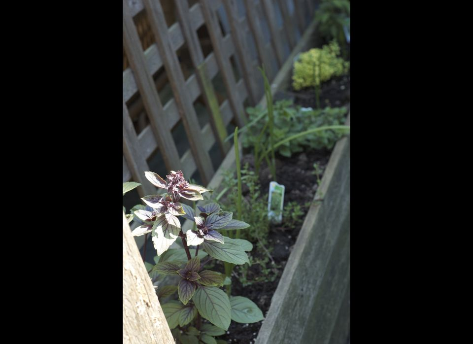 One easy way to get your feet wet with edible gardening is to grow your own herbs. <br> Consider growing perennials herbs t