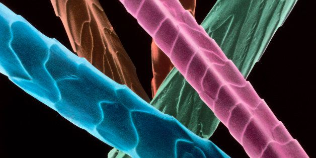 Angora wool fibres. Coloured scanning electron micrograph of fibres of angora wool. These show the overlapping scales typical
