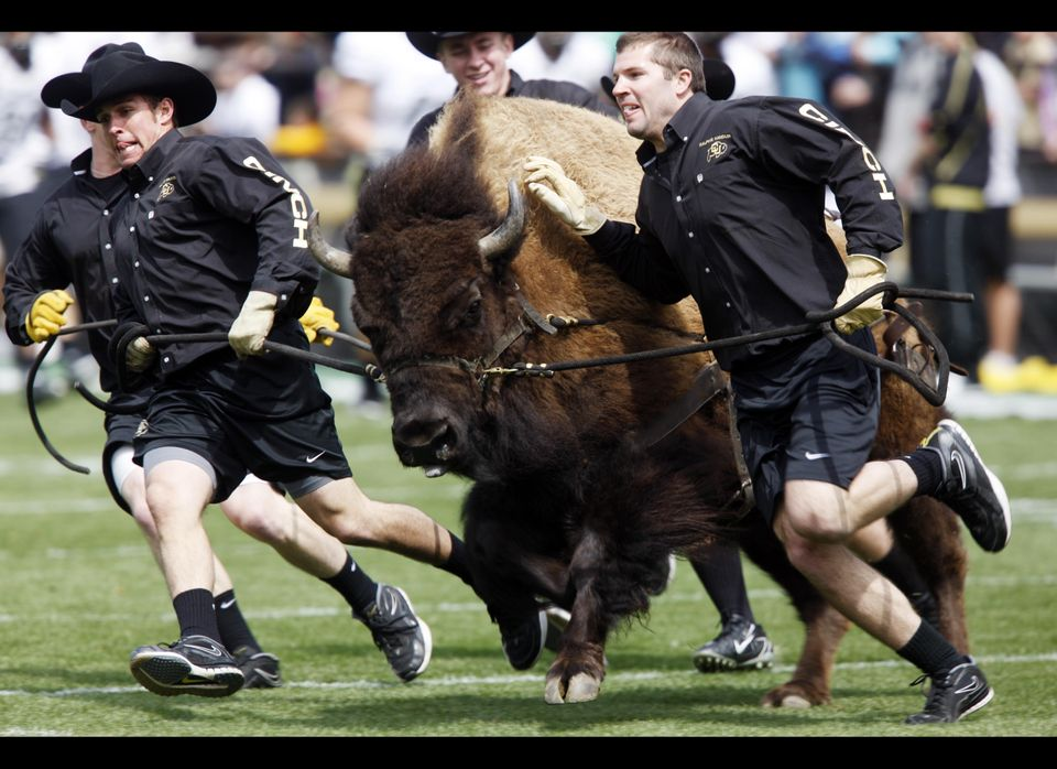 Her (yes, Ralphie is a female) size (1,300) and speed (25 mph) combination would have Ralphie soaring up Mel Kiper's draft bo