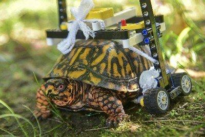 Schildkröte verletzt sich – Zoo hilft ihr mit