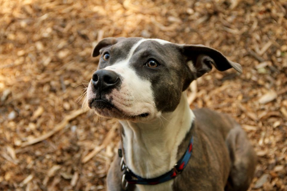 "Look at this precious sweetie! Find out more about this lovely guy <a href=""http://www.petango.com/webservices/adoptablesearc"