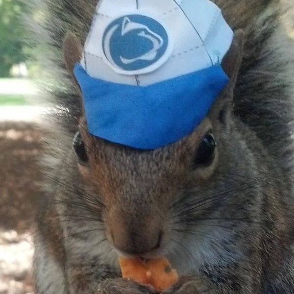 "Penn State loves their squirrels. They have a popular Facebook page <a href=""https://www.huffpost.com/entry/sneezy-penn-state"