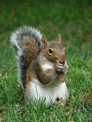 "The<a href=""https://www.facebook.com/pages/Squirrels-of-Wash-U/127465624111524"" target=""_blank""> Squirrels of Wash U Facebook"