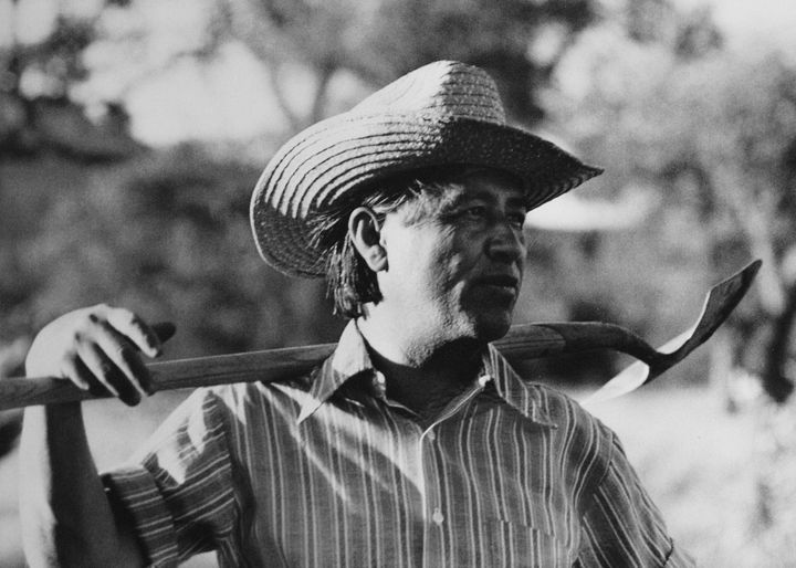 Cesar Chavez (1927 - 1993), founder of United Farm Workers (UFW), holds a shovel across his shoulders while working in the co