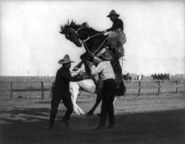 """Cowboys borrowed this term for a wild horse from <a href=""""http://www.merriam-webster.com/dictionary/bronco"""" target=""""_blank"""">S"""