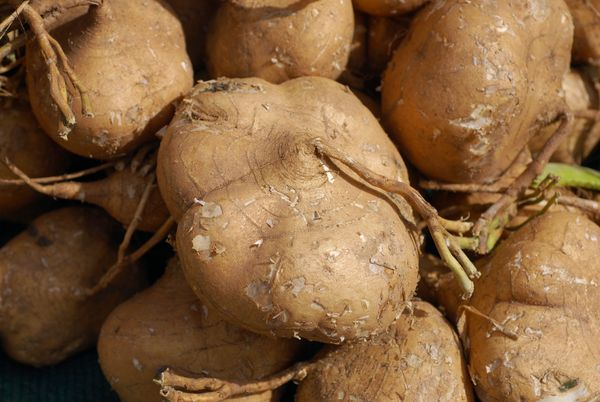 "This vegetable, which is becoming increasingly popular in the United States, bears a name <a href=""http://dictionary.referenc"