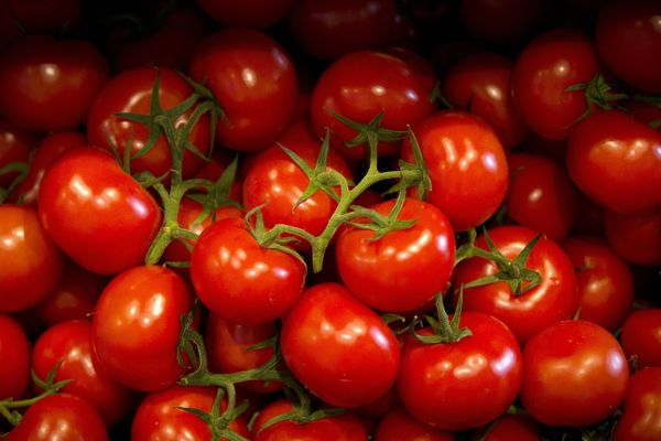 "The English word for this fruit is an <a href=""http://dictionary.reference.com/browse/tomato?s=t"" target=""_blank"">adaption of"