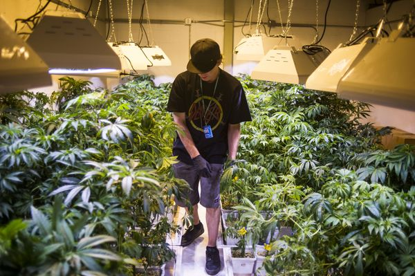 <strong>Colorado and Washington become first U.S. states to legalize weed for recreational use. </strong>