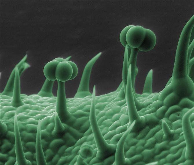 Electron Microscope Photos Show Spider Skin, Coffee, Dandelions