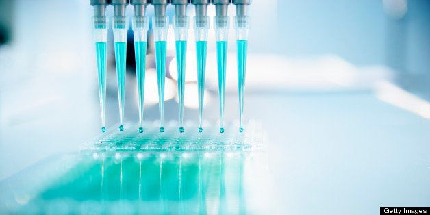 Using a multichannel pipette to transfer liquid into a microtiter plate.