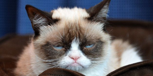 SANTA MONICA, CA - JULY 23:  Grumpy Cat makes an appearance at Kitson Santa Monica to promote her new book 'Grumpy Cat : A Gr