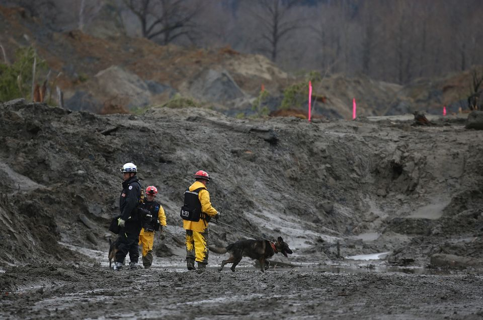 OSO, WA - APRIL 04:  A search and rescue team from Sacramento, California with cadaver dogs searches debris from a deadly mud