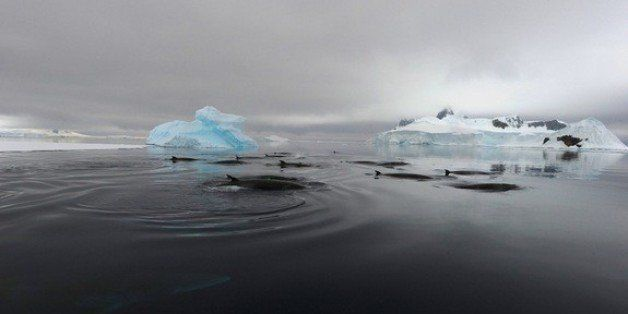 Mysterious 'Bio-Duck' Ocean Sounds Tied To Antarctic Minke