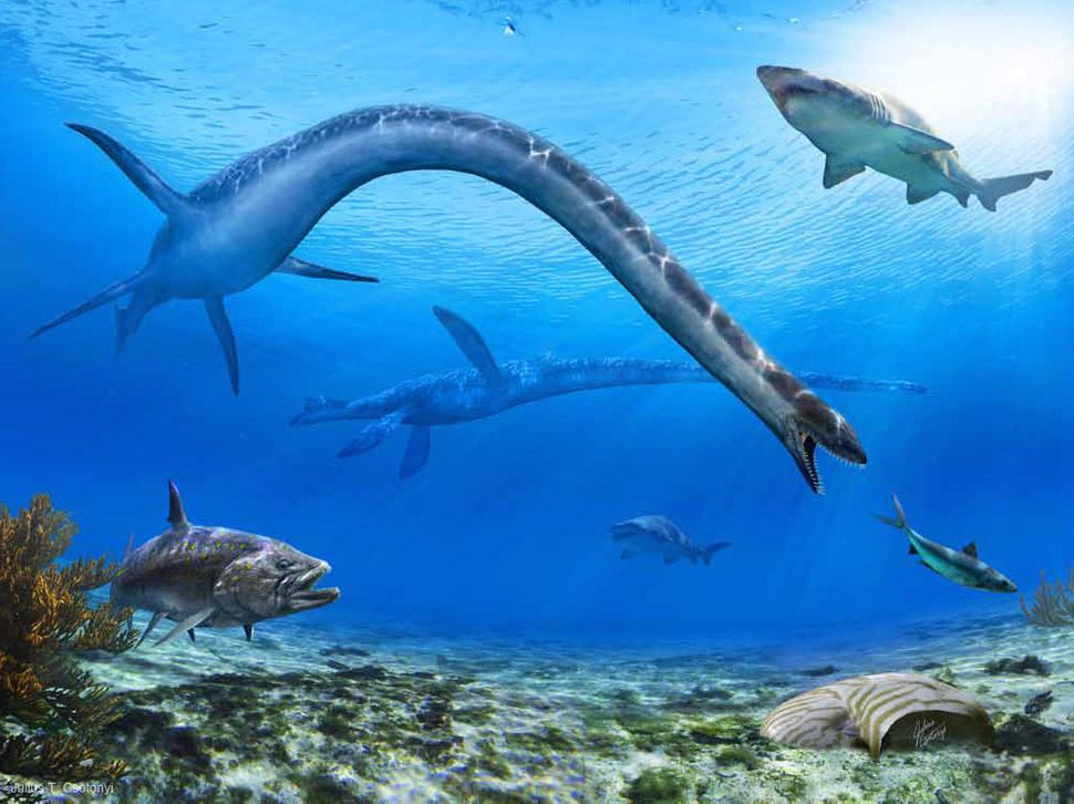"Around 74 million years ago, Albertonectes was the ultimate ""stretch-limo"" of a group of prehistoric reptiles called plesiosa"
