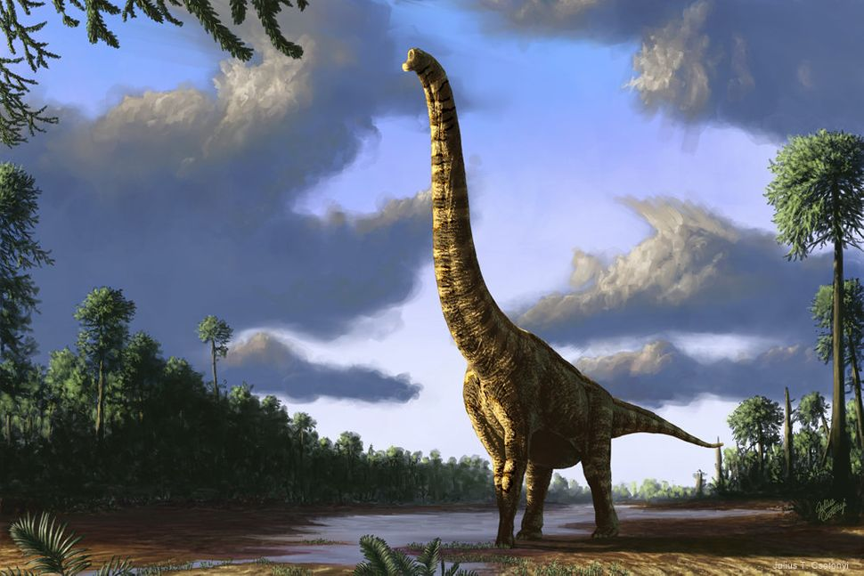 "Brachiosaurus, the iconic sauropod (""lizard-footed"") dinosaur from the Jurassic period, at dawn."