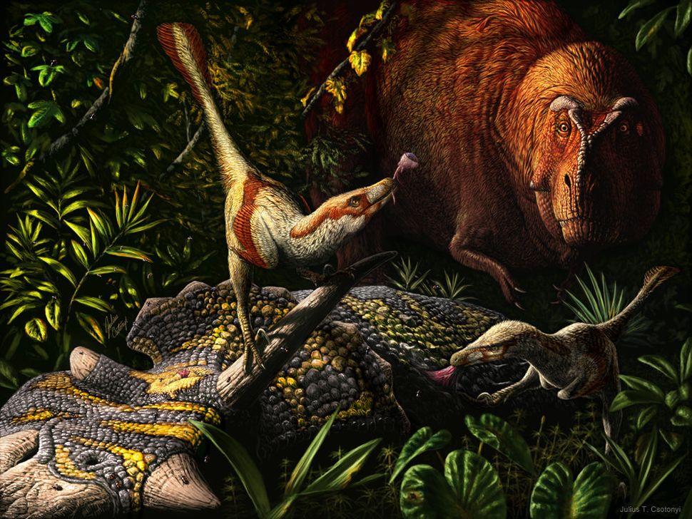 Acheroraptor, a bird-like dinosaur belonging to the dromaeosaur family of dinosaurs, beats a T. rex to a fresh carcass. Acher