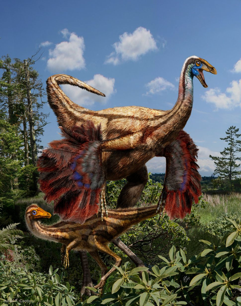 Ornithomimus is the first known feathered non-avian dinosaur from the western hemisphere.