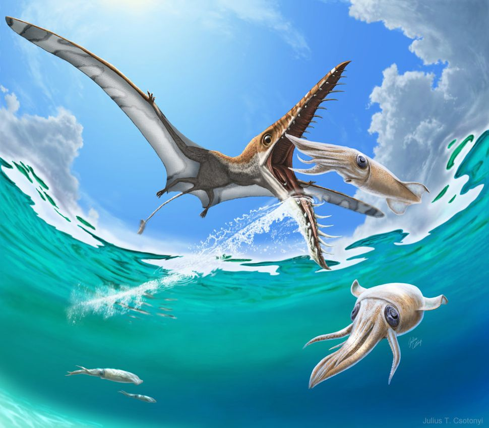 Rhamphorhynchus, a long-tailed pterosaur, hypothetically feeding on squid.