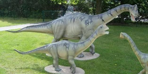 Pocket Sauropod Fossils Show Evolution Of Giant Dinosaurs Little Cousins
