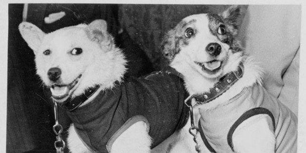 Belka and Strelka, Russian cosmonaut dogs, 1960. Belka and Strelka flew into Earth orbit on board Sputnik 5 on 19 August 1960