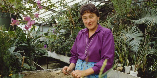 American biologist Lynn Margulis at work in a greenhouse, circa 1990. (Photo by Nancy R. Schiff/Getty Images)