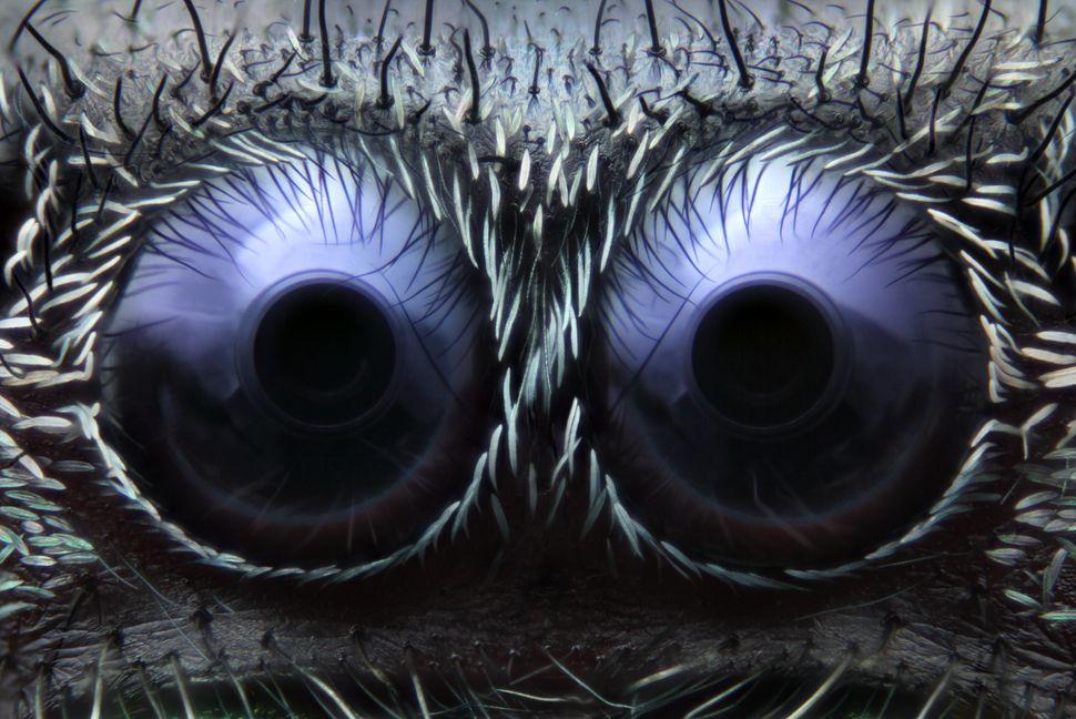 3rd Place: Noah Fram-Schwartz Greenwich, Connecticut, USA. Jumping Spider Eyes. Reflected Light 20X