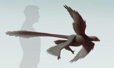 "Changyuraptor yangi, the <a href=""https://www.huffpost.com/entry/four-winged-dinosaur_n_5588232?utm_hp_ref=dinosaurs"" target="