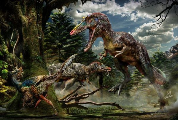 Not all tyrannosaurs had short, brutish faces like that of Tyrannosaurus rex. Paleontologists in China unearthed the remains