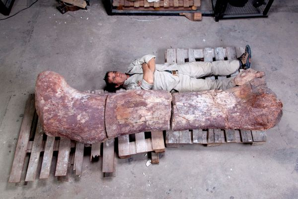 "Scientists unearthed the remains of <a href=""https://www.huffpost.com/entry/fossil-largest-dinosaur-discovery-titanosaur_n_53"