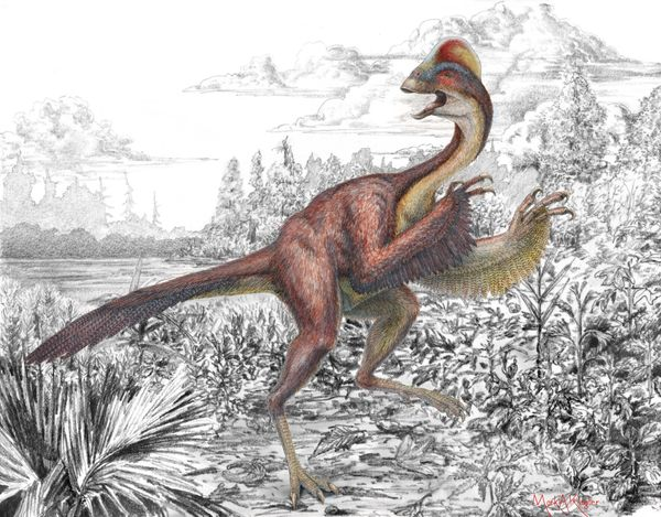 """The team that named this bird-like dino originally wanted to call it the Latin or Greek version of """"chicken from hell,"""" but t"""