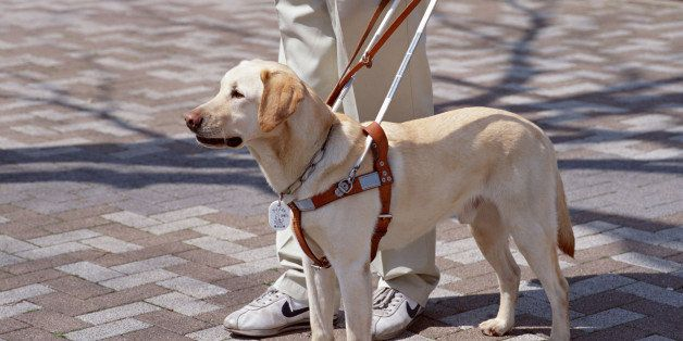 Learning To Navigate The World Through The Eyes Of A Guide Dog