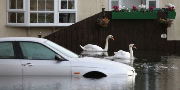 CHERTSEY, UNITED KINGDOM - JANUARY 08:  Swans explore the Abbey Fields caravan park after the River Thames flooded on January