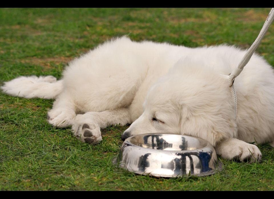 For your doggie dishes, purchase stainless steel or ceramic bowls instead of plastic. These materials last longer and don't h