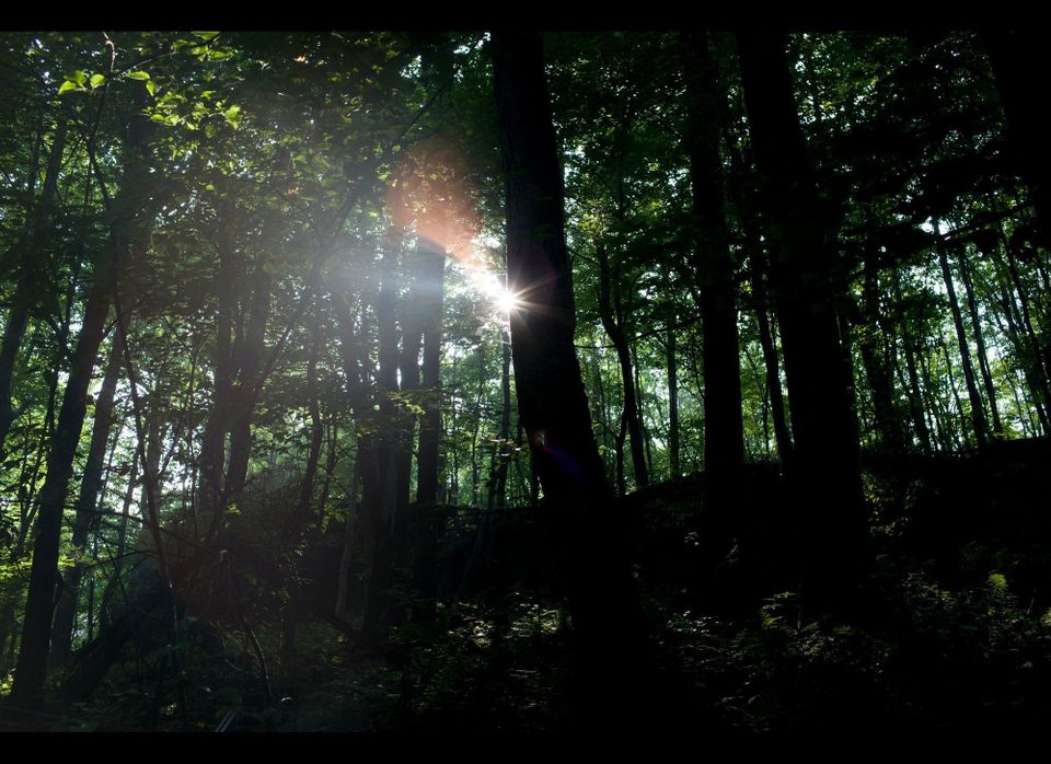 Light shines through the forest during a hike to Raven's Rock in the Cooper's Rock State Forest outside of Morgantown, West V