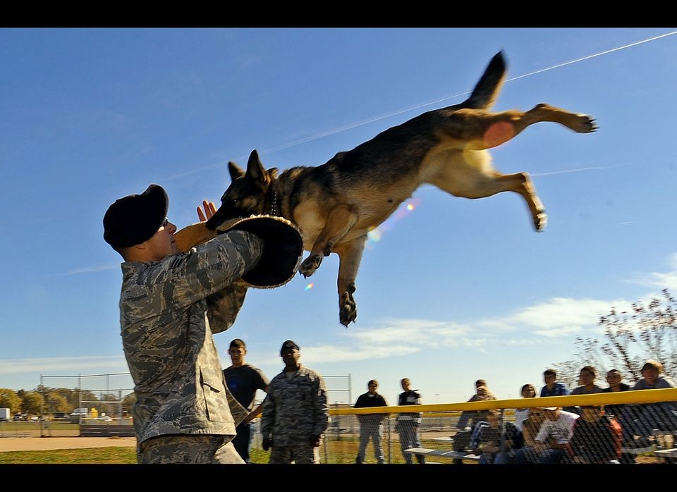 Senior Airman Steve Hanks and his partner Ada demonstrate the grace and brute strength that a military working dog possesses