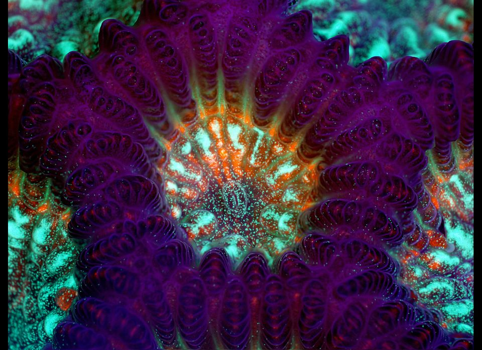 "<a href=""http://www.thesea.org/coral-reef/brain_coral/brain_coral.htm"" target=""_hplink"">One of the strongest coral species in"