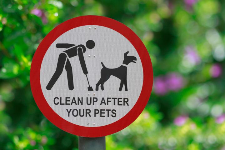 Dog Poop Poses Disease Risk: Scoop Fido's Feces While It's