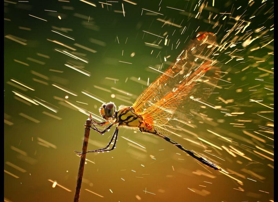 "2011 National Geographic Photo Contest <em><a href=""http://ngm.nationalgeographic.com/ngm/photo-contest/2011/entries/104493/"
