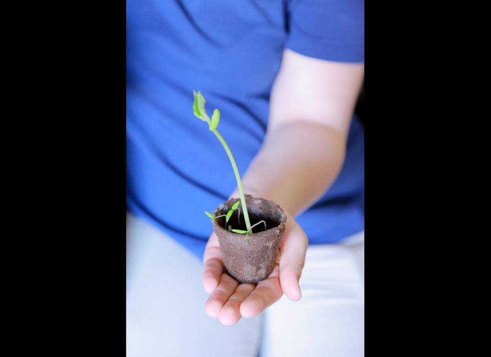 """Fill the cups of a paper egg carton with soil and place a seed in each one. Once <a href=""""http://www.networx.com/article/star"""