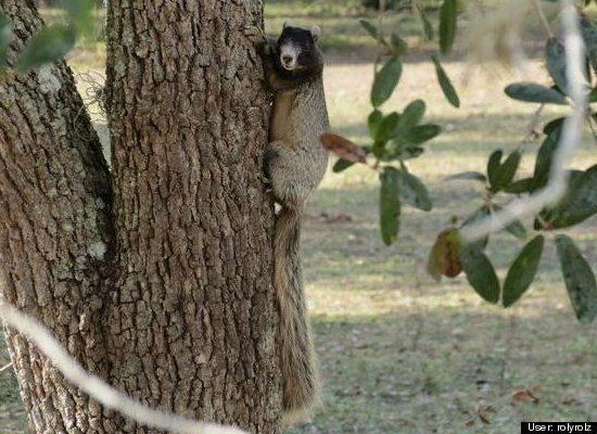 Squirrel Appreciation Day 2012: Photo Competition | HuffPost